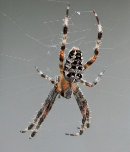 psscc_winners_Spider_David.Brown_L